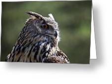 Eurasian Eagle-owl Greeting Card by Garry Gay