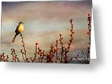 Evening Mocking Bird Greeting Card by Darren Fisher