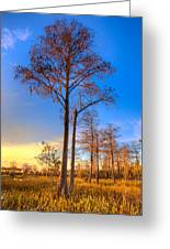 Everglades At Sunset Greeting Card by Debra and Dave Vanderlaan