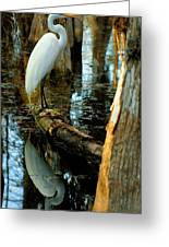 Everglades Egret Greeting Card by Daniel Woodrum