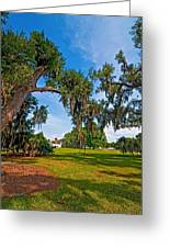 Evergreen Plantation II Greeting Card by Steve Harrington