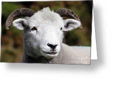 Exmoor Horn Sheep Greeting Card by Terri  Waters