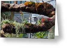 Exotic Plants Greeting Card by Rod Jones