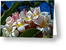 Expressions Of Love - Plumeria Greeting Card by Karon Melillo DeVega