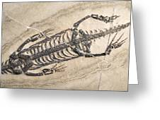 Extinct Reptile Skeleton Greeting Card by Science Photo Library