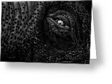 Eye Of The Elephant Greeting Card by Bob Orsillo