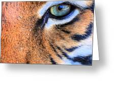 Eye of the Tiger Greeting Card by JC Findley
