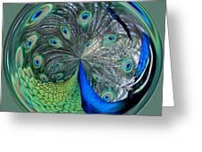 Eyes Of A Peacock Greeting Card by Cynthia Guinn