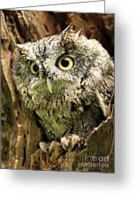 Eyes Of Wisdom Eastern Screech Owl In Hollow Tree Greeting Card by Inspired Nature Photography By Shelley Myke