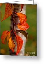Fall Beauty Greeting Card by Sharon Elliott
