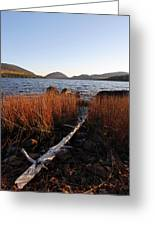 Fall Colors At Eagle Lake In Maine Greeting Card by Juergen Roth