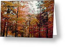Fall Colors Greeting Card by Michael Creamer