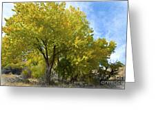 Fall Cottonwoods Greeting Card by Dianne Phelps