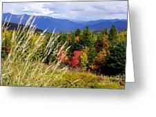 Fall Foliage 2 Greeting Card by Kerri Mortenson