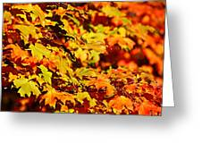 Fall Foliage Colors 13 Greeting Card by Metro DC Photography