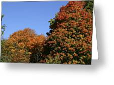 Fall Foliage In The Arboretum Greeting Card by Natural Focal Point Photography