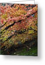 Fall Leaves At West Fork Arizona Greeting Card by Dave Dilli