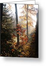 Fall Leaves In Morning Greeting Card by Susan Crossman Buscho