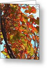 Fall Leaves Greeting Card by Scott Cameron