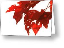 Fall Leaves Greeting Card by Susie DeZarn