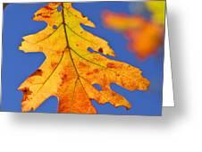 Fall oak leaf Greeting Card by Elena Elisseeva