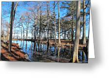 Fall Reflections And Shadows Greeting Card by Valia Bradshaw