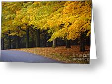 Fall Road And Trees Greeting Card by Elena Elisseeva