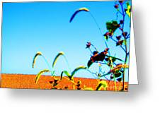 Fall Skies On Soybeans Farm Greeting Card by Tina M Wenger
