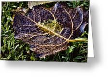 Fallen Leaf 2 Greeting Card by Greg Jackson