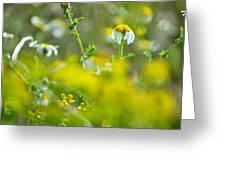 Fallen Petals Greeting Card by Guido Montanes Castillo