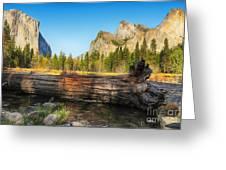 Fallen Tree In Yosemite Greeting Card by Jane Rix