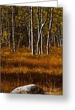 Falling Rock Greeting Card by Mitch Shindelbower