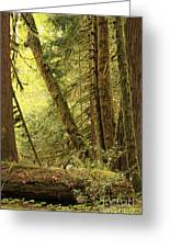 Falling Trees In The Rainforest Greeting Card by Carol Groenen