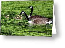 Family Outing Greeting Card by Ed Weidman