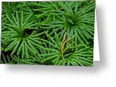 Fan Club Moss Foliage Greeting Card by Daniel Reed