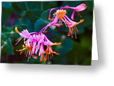 Fantasy Flowers Greeting Card by Omaste Witkowski