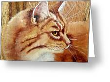 Farm Cat On Rustic Wood Greeting Card by Debbie LaFrance