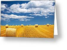 Farm field with hay bales Greeting Card by Elena Elisseeva