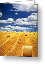 Farm Field With Hay Bales In Saskatchewan Greeting Card by Elena Elisseeva