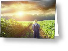 Farmer Walking In Corn Fields At Sunset Greeting Card by Sandra Cunningham