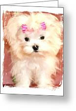 Faux Maltese Bella Greeting Card by Margaret Newcomb