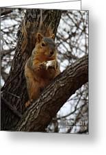 Feasting On Fish Fox Squirrel Greeting Card by Sara  Raber