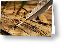 Feather And Sand Greeting Card by Raimond Klavins
