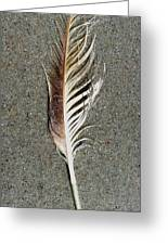 Feather On The Beach Greeting Card by Patricia Januszkiewicz