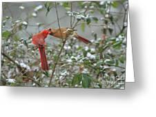 Feeding Cardinals Greeting Card by Geraldine DeBoer