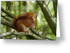Feeding Red Squirrel Greeting Card by Sharon Bennett