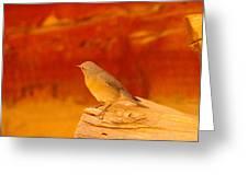 Female Blue Bird Greeting Card by Jeff  Swan