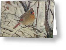 Female Cardinal In The Snow II Greeting Card by Sandy Keeton