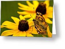 Female Gulf Fritillary  Greeting Card by Carol Toepke