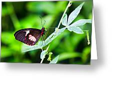 Female Pink Cattleheart Butterfly Greeting Card by Jane Rix